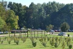 Kenyeres-kert szőlők